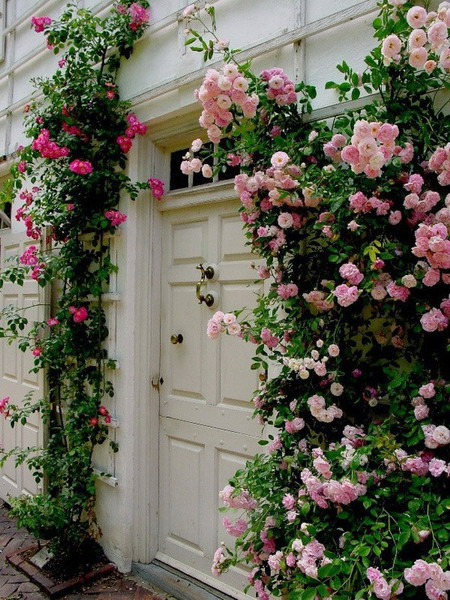 roses in garden entrance 01