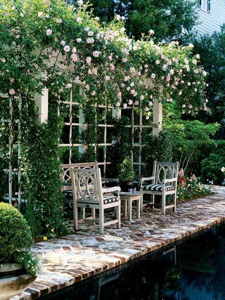 roses around the sitting area
