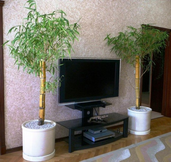bamboo decor ideas plant 01