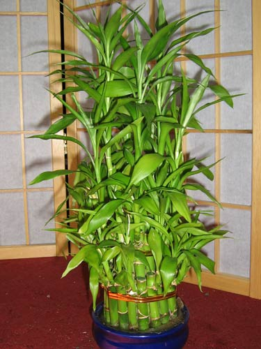 bamboo decor ideas plant 02