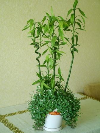 bamboo decor ideas plant 03
