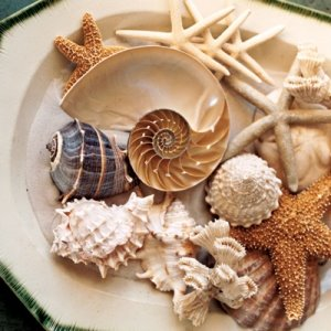 eco style ideas sea shell 01