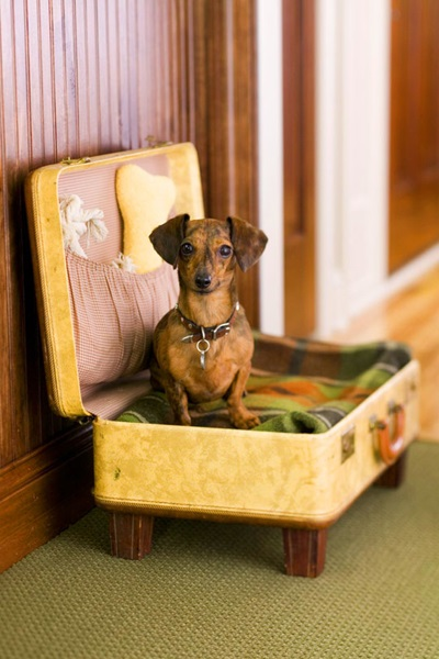 furniture for pets 05
