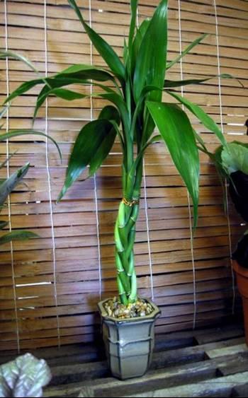 house plant ideas 01