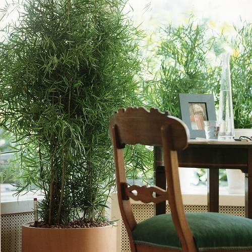 house plant ideas 02