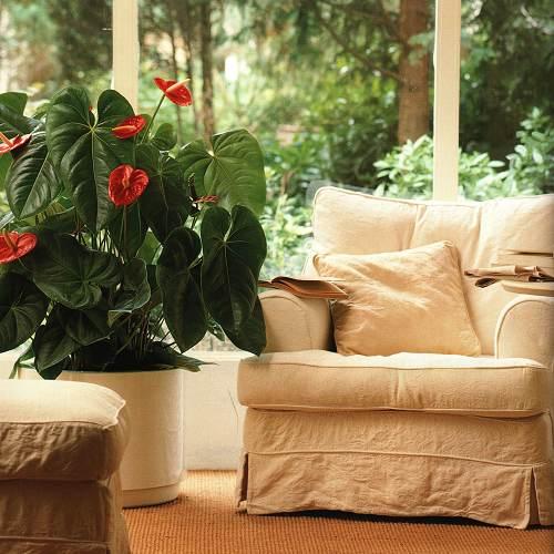 house plant ideas 05