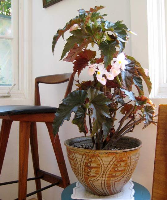house plant ideas 06