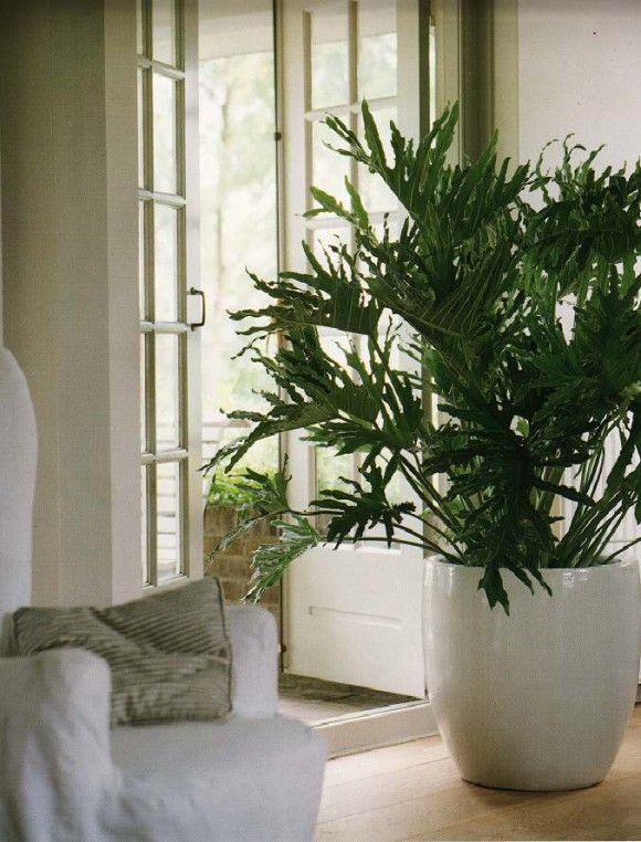 Large plants in the house ideas designs and more Large living room plants