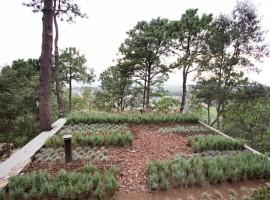 the forest pavilion 01