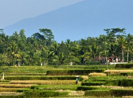 uma ubud resort in the majestic bali 01