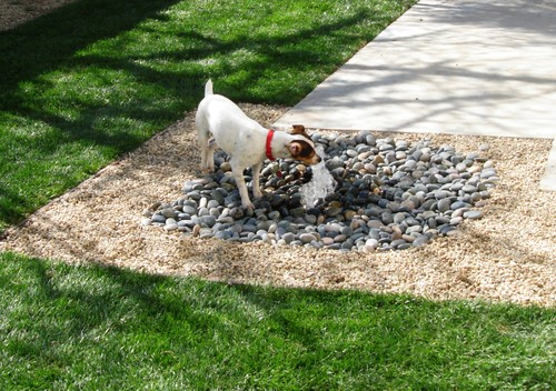 Dog lovers? backyard 8 ideas for delighting your dog!  Interior
