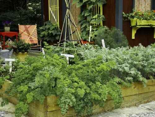 Build Your Own Vegetable Garden This Season