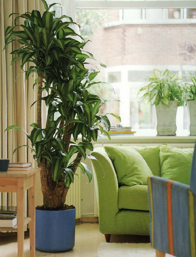 Large plants in the house - Ideas, designs and more ...
